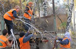 В округе приводят в порядок деревья