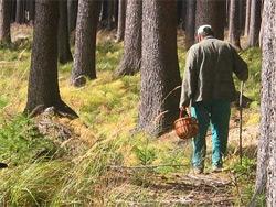 Житель Озерска поймал в лесу шальную пулю