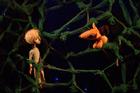 Озерский «Маленький принц» на первом в России фестивале для взрослых
