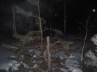 В Озерске расследуются несколько уголовных дел, связанных с незаконной порубкой деревьев.